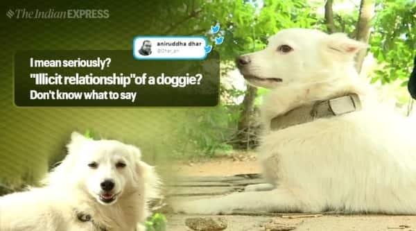 kerala dog illicit relationship, kerala dog abandoned, Pomeranian dog abandoned illicit relationship kerala, trending, indian express, indian express news