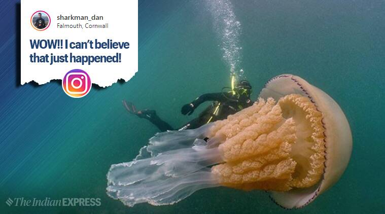 giant jellyfish, giant jellyfish pic, barrel jellyfish, Lizzie Daly, England, Wild Ocean Week, viral pic, trending, indian express, indian express news