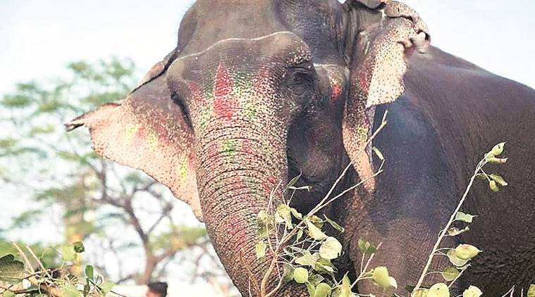 Letter goes off to Delhi Police chief: Missing elephant a concern