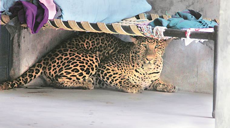 Haryana villagers learn about co-existence — with monkeys, leopards