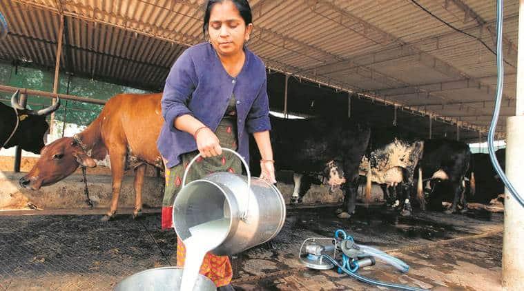 Livestock, livestock sector, Fisheries ministry, India livestock sector, livestock sector development