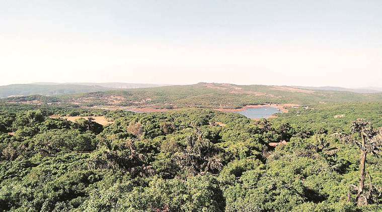 NGO to conduct 18-month-long survey on ecology and biodiversity of Mahabaleshwar-Panchgani region
