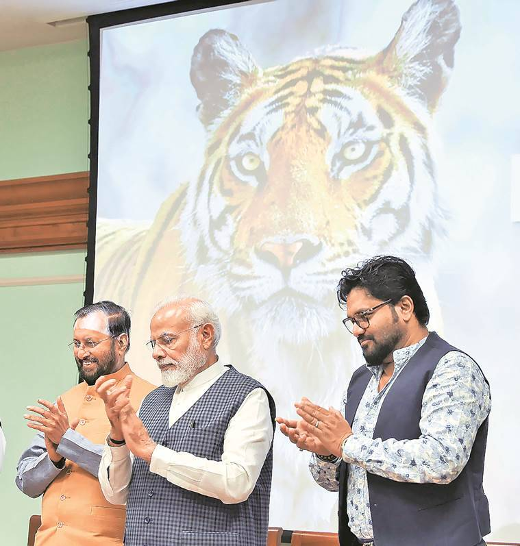 tiger, tiger count, world tiger day, tiger census, narendra modi, tiger number, tiger reserves, tiger numbers increase, indian express