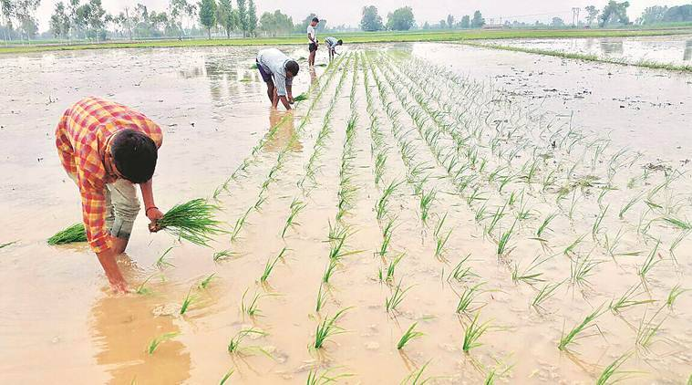 punjab, punjab kharif sowing, kharif, khairf crop, kharif sowing season, kharif crop sowing season, monsoon, punjab mosnoon