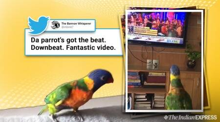 Dancing parrot viral video, Lorikeet parrot twitter viral video, Dancing parrot twitter viral video, Lorikket parrot dancing video, Trending, Indian Express news