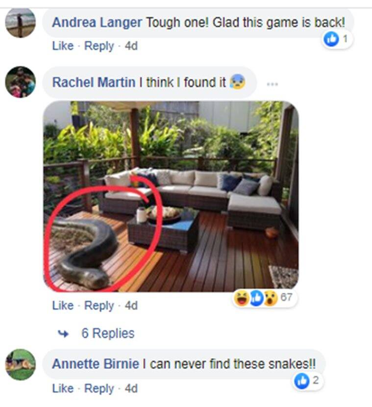 australian family spots snake, family finds Carpet Pythons, Carpet Pythons australia, trending, indian express, indian express news