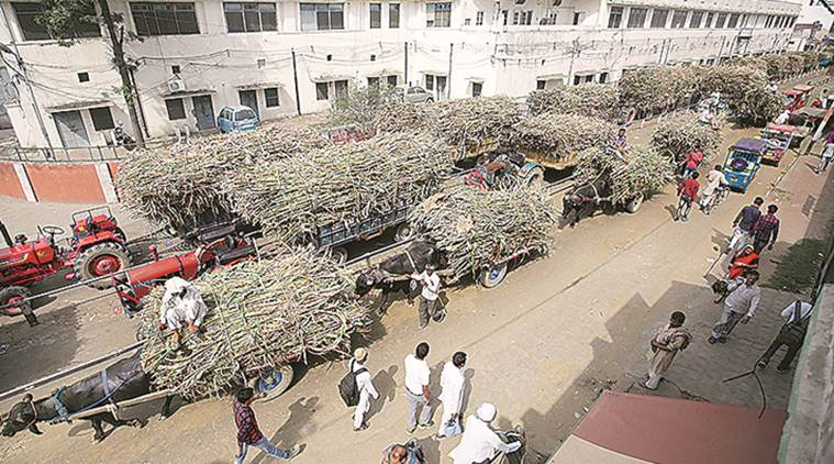 Around 1.25 lakh tons of sugarcane remain unharvested