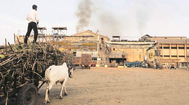 sugarcane, sugarcane farmers, maharshtra sugarcane farmers, maharashtra sugarcane farmers crisis, sugarcane farmers crisis, maharashtra sugar mills, maharashtra news, indian express