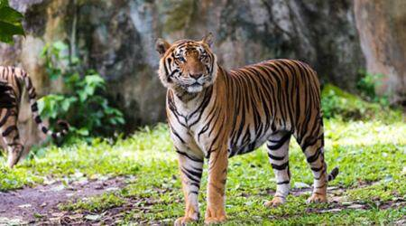 world tiger day, documentaries