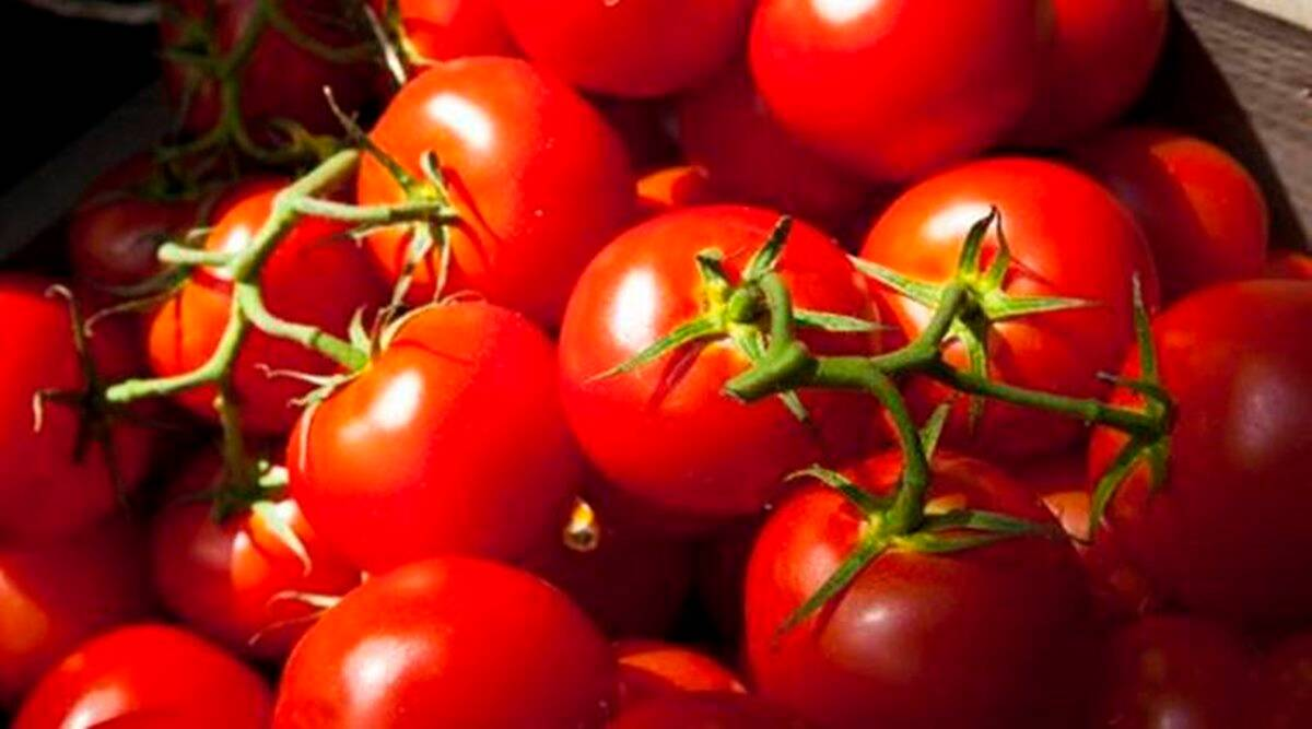 tomatoes, how to cut tomato, kitchen hacks, indian express, indian express news