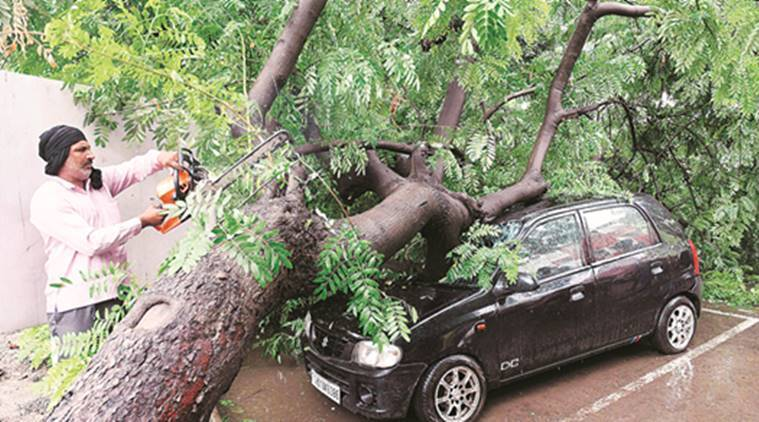 trees, tree felling, tree felling chandigarh, punjab and haryana court, forest department, chandigarh administration, chandigarh news, indian express news