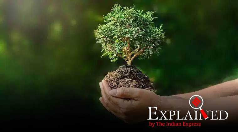 trees, plant a trillion trees, Restoration of forests, India forests, climate change, global warming, save a tree, green environemnt, trees getting cut, deforestation, Indian express