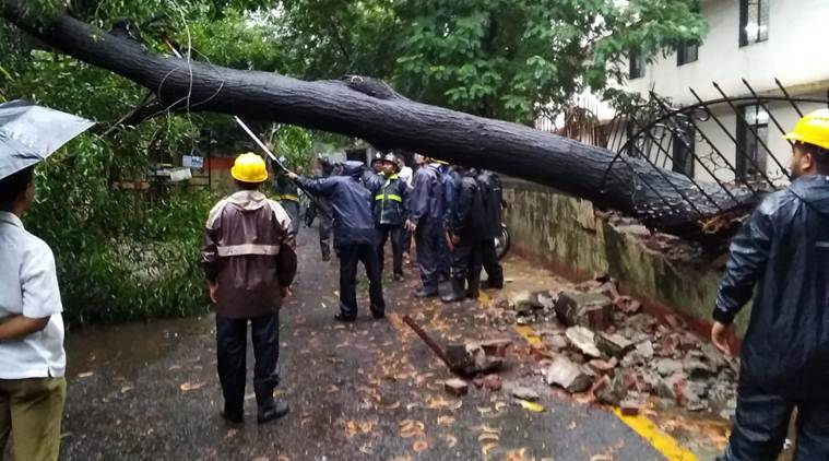 A tree fell down on the compound wall of Shreerang School in Thane. No injuries were reported as students had not present at that time. (Express Photo)