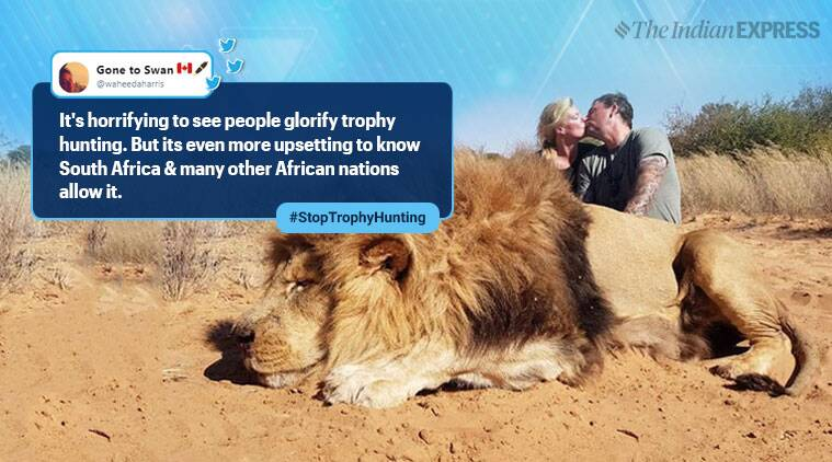 trophy hunting, lion hunting, lion hunting copule kiss photp, couple trophy hunting viral photo, africa animal hunting tour, indian express