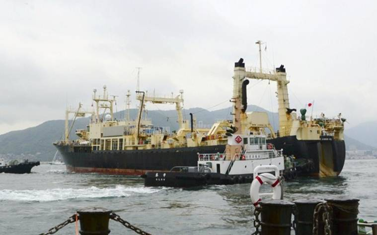 Japan, Japan whaling, Japan commercial whaling, Japan whaling commission, Japan research whaling, International Whaling Commission