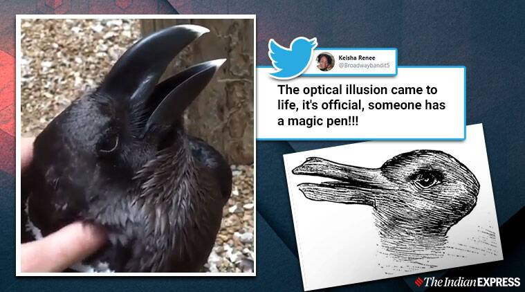 Bird or bunny? Viral video confuses the internet