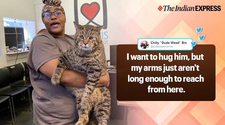 26-pound tabby cat becomes internet's new darling