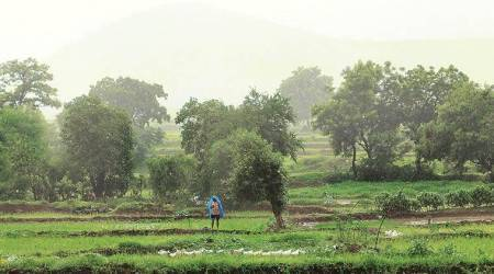 kharif, kharif season, kharif crop, kharif cropping season, farmers, indian farmers, agriculture, India monsoon, India weather, india meterorological department, imd, indian express