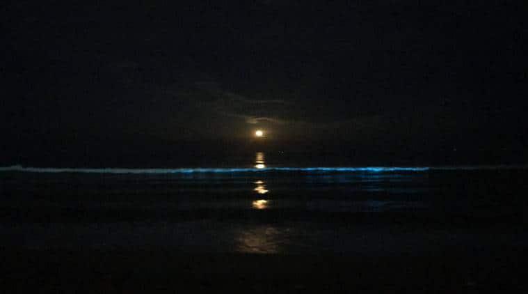 Blue glow at Thiruvanmiyur: Bioluminescence spotted on Chennai beach