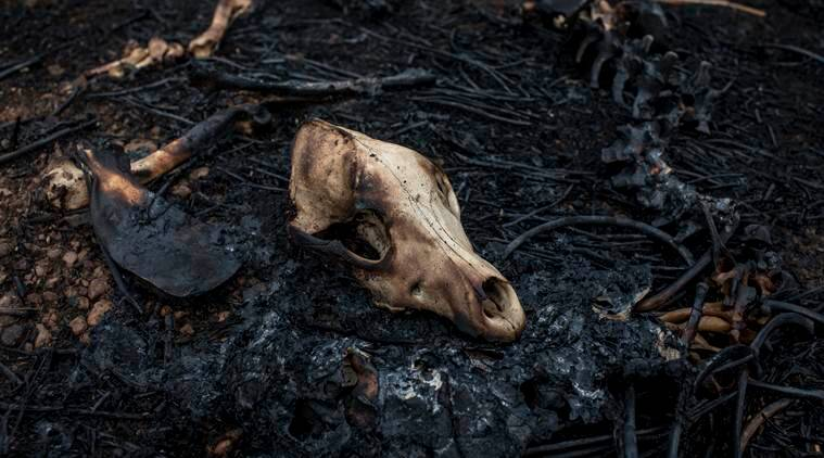 Brazil forest fire, Amazon forest fire, Amazon rainforest in Brazil, Forest fires Indonesia, Climate change forest fires, Indian Express World news