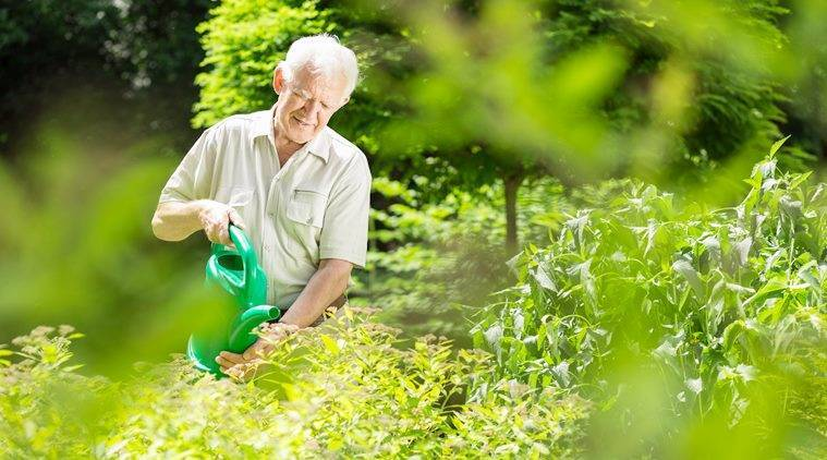 how to use RO water, gardening, gardening with RO water, indian express