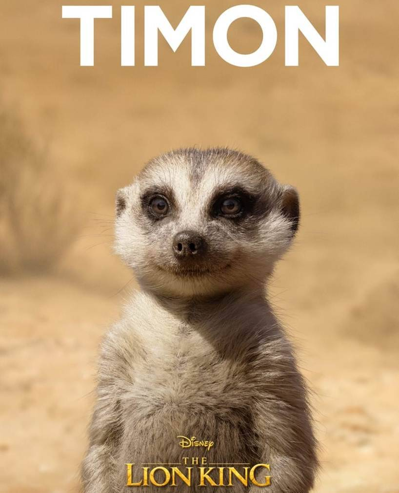 timon in lion king