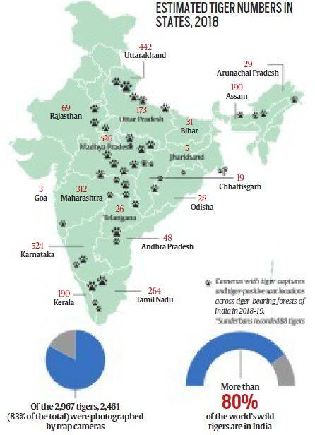 tigers outside reserves, tiger reserves, tiger population, tiger in numbers, indian express news