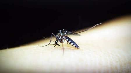 mosquito, ayurvedic tips to keep mosquitoes away, dengue, malaria, zika, chikunginya