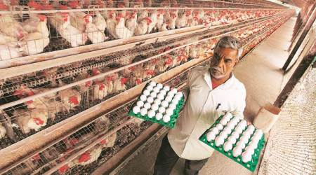agriculture poultry, include poultry in agriculture, poultry farmers, poultry income tax, poultry farmers benefits, indian express news