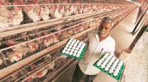 Pune: Poultry farmers 'refuse to let Muslim drivers enter villages'