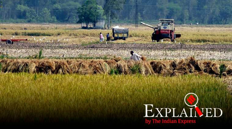 Explained: Why Punjab farms continued to burn despite govt's incentive promise