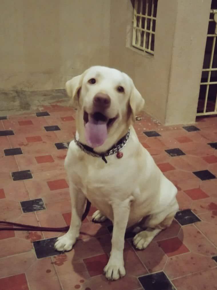 gurkha dog