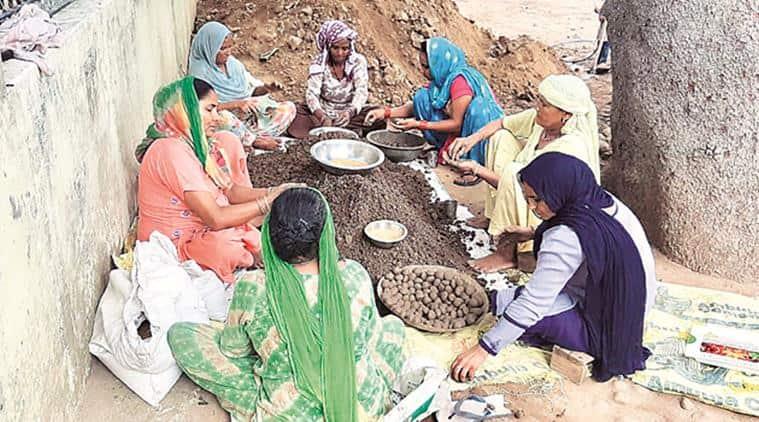 Punjab news, Punjab gree cover, seed balls punjab women group, punjab group seed balls, indian express, latest news