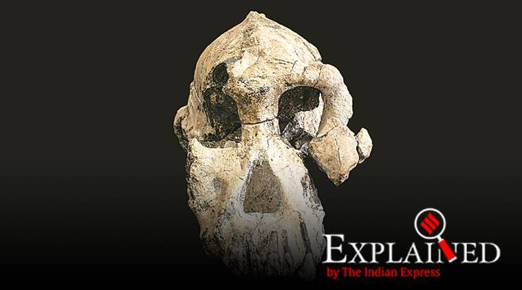 What a skull tells us about human evolution