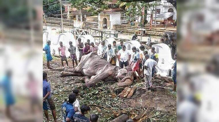 Sri Lankan elephant whose photos went viral 'collapses', minister orders investigation