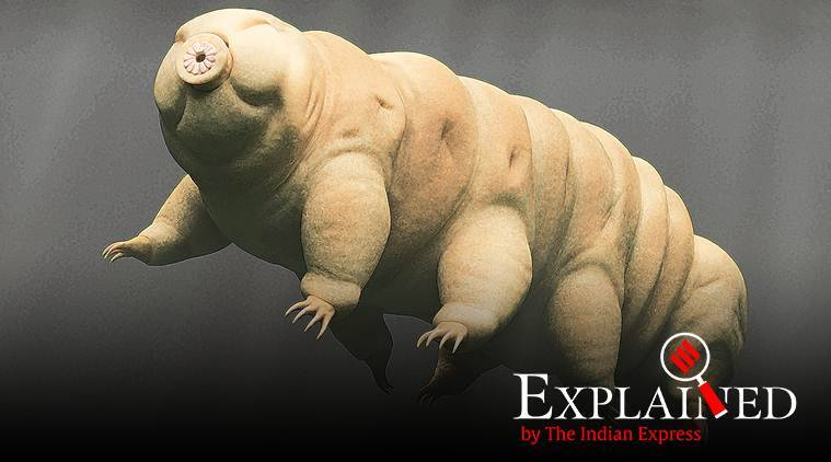 Explained: What is Tardigrade, the water bear