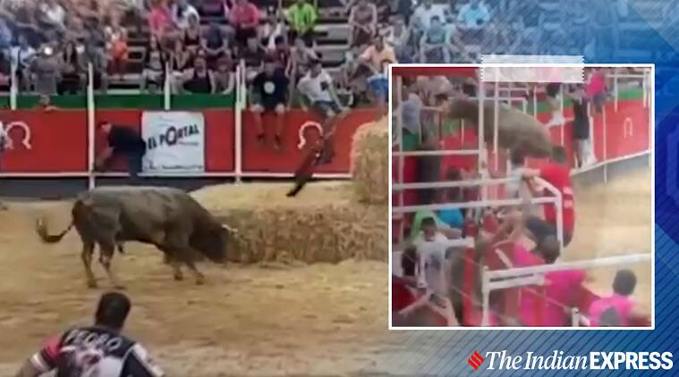 bull attacks people, spain bull fighting, spain bull escapes ring, viral videos, indian express
