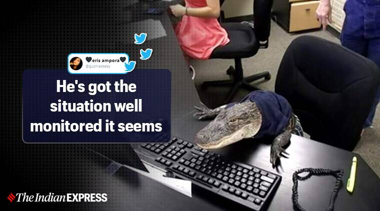 Alligator 'Rambo' goes to work! Old pic of pet leaves netizens in splits