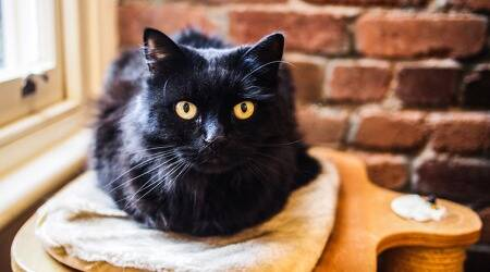 black cat, omen, superstition, friday the 13th, indian express news