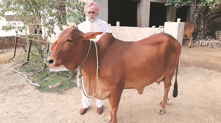 This Punjab farmer rakes in Rs 2 1 lakh from sale of Sahiwal