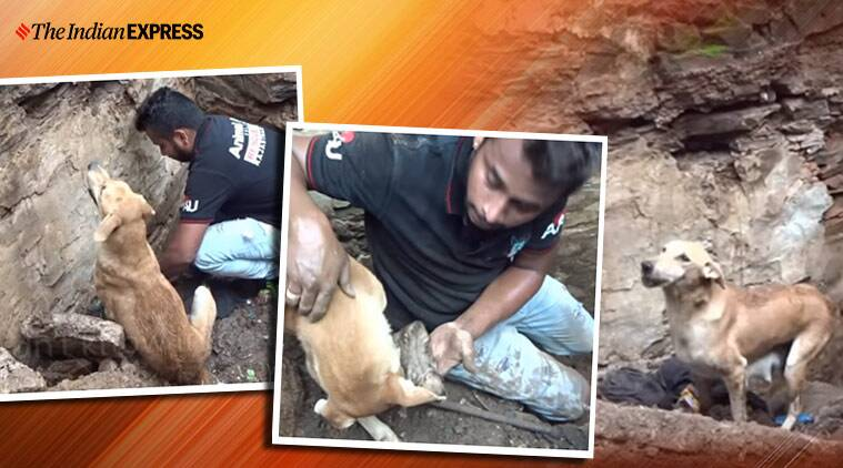 viral video dog buried puppies, Animal Aid Unlimited, dog rescue, dog rescues puppies,