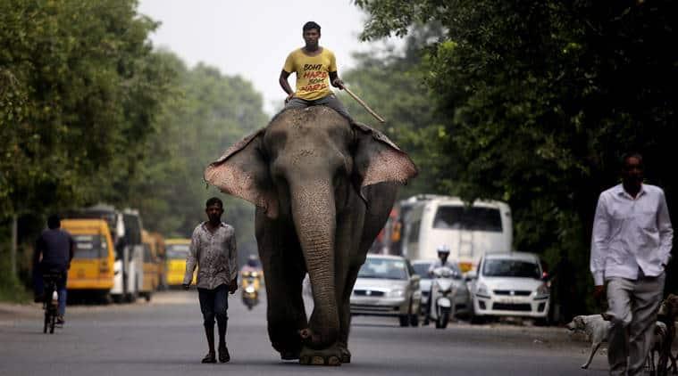 Delhi missing elephant, delhi laxmi elephant, delhi missing laxmi elephant, delhi elephant, delhi's last elephant, laxmi elephant, delhi news, delhi police