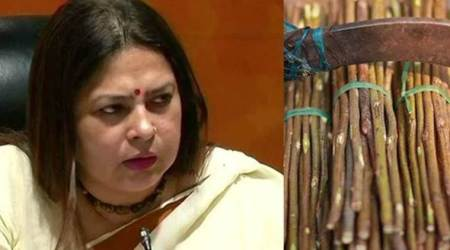 no plastic use, govt to ban plastic use, meenakshi lekhi on plastic use, meenakshi lekhi says use neem twigs