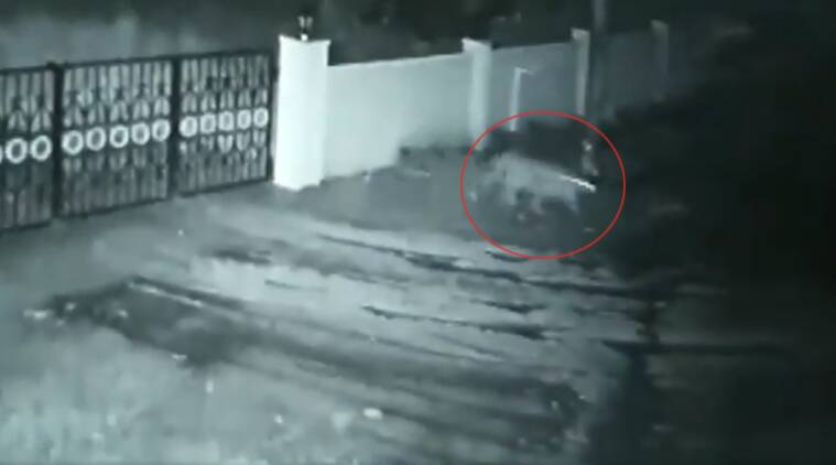Karnataka leopard dog viral video, leopard takes dog, leopard viral video