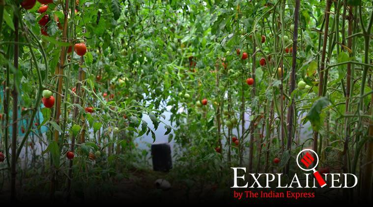 Explained: What is PGS, the heart of the organic food production industry?