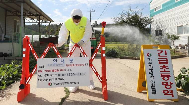 South Korea on high alert after first African swine fever case found