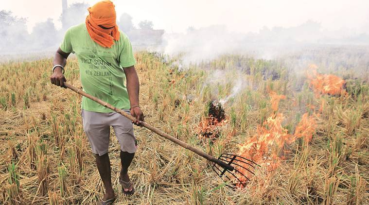 In Punjab, farmers say give us bonus or let us burn stubble