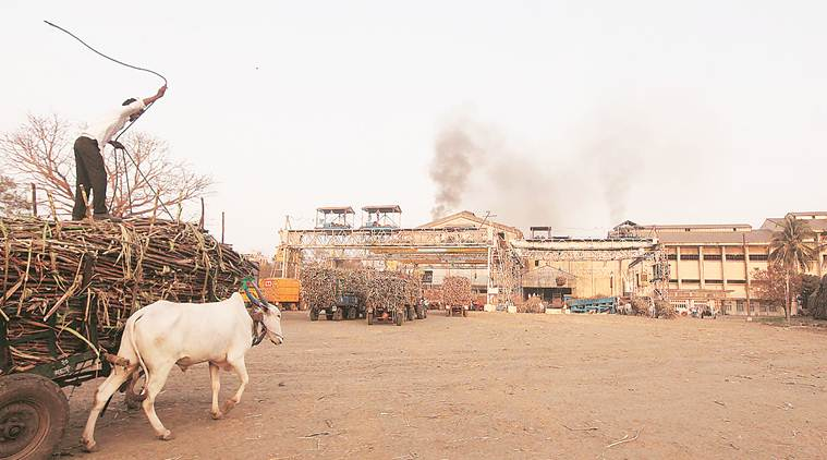 Low international sugar prices to hit India's exports
