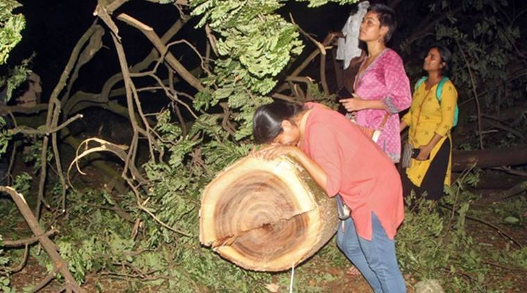 aarey, aarey trees cut down, aarey protests, arey mmrcl, aarey car shed