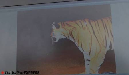 Bandipur-tiger-killed-spotted-camera-trap